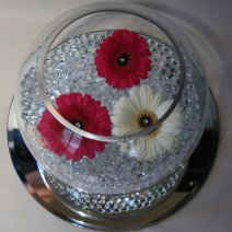 Gerberas on waterbeads
