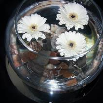 Floating gerbera fishbowl