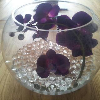 Orchid fishbowl